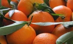 clementine calabria